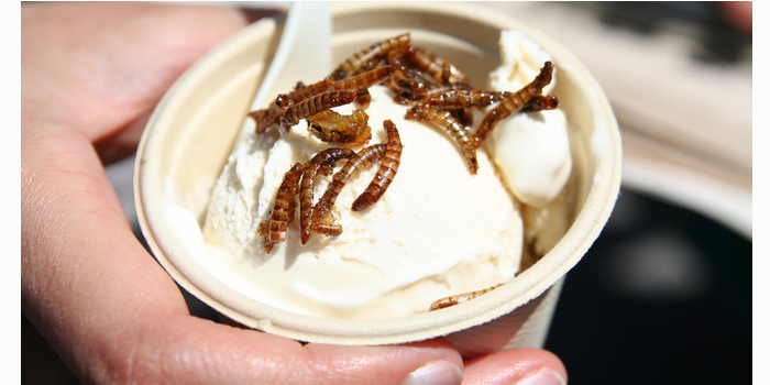 Insect ice-cream 07.07.15.png