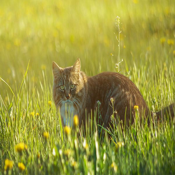 Cat in Spring.jpg